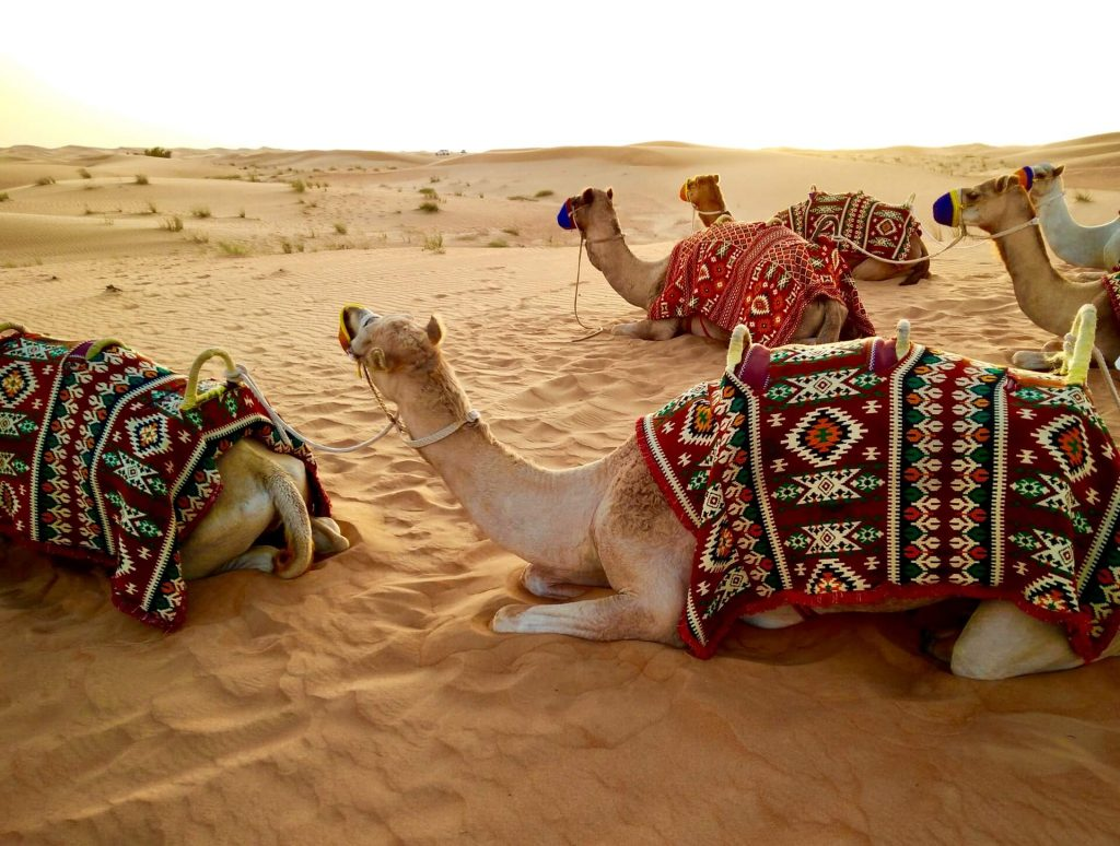 fernando-jorge-2dtvA_QgF6Q-unsplash-1-1-1024x774 24 Hours in DUBAI